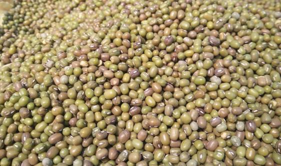 """綠豆讓你解暑一""""夏"""" 色選機把控品質大關"""